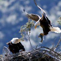 Самое большое птичье гнездо в мире 🦅