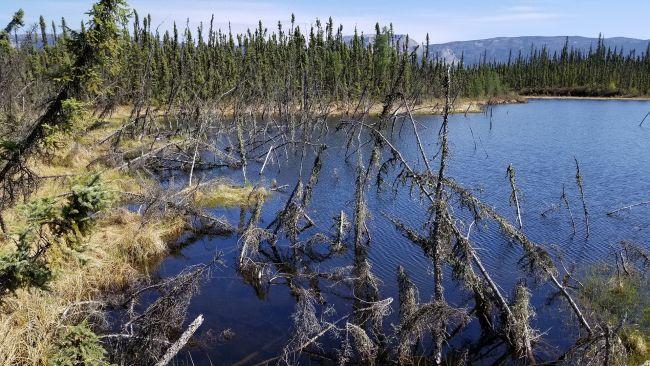 Новый температурный рекорд в Сибири: +38 °C