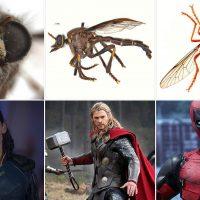 Австралийские «мухи-убийцы» названы в честь героев Marvel