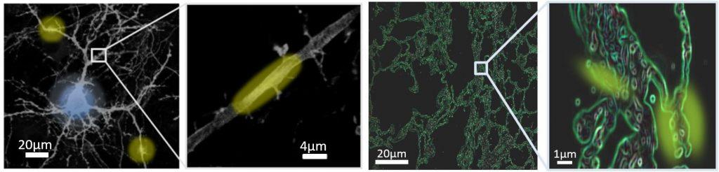 Проект ChipScope: революция в мире оптической микроскопии