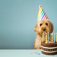 Учёные разработали новую формулу пересчёта возраста собак по человеческим меркам