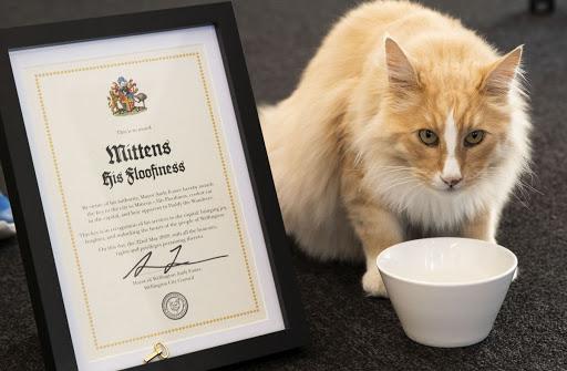Кот Миттенс стал кандидатом на премию «New Zealander of the Year»