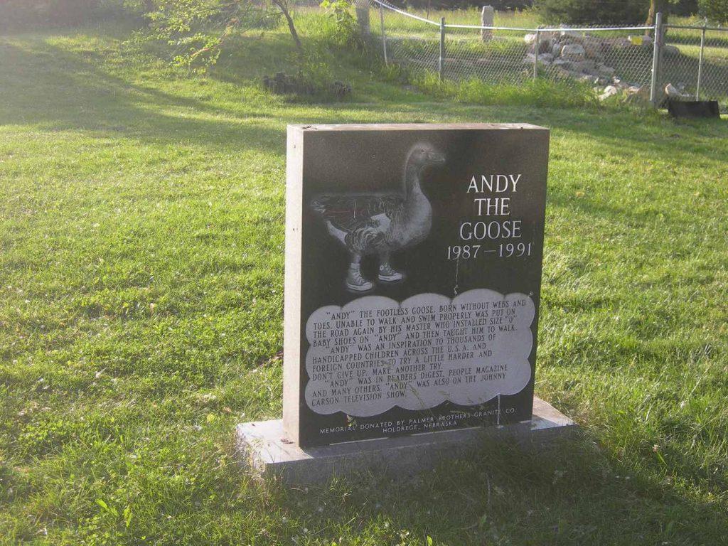Энди – безногий гусь: история жизни и тайна смерти