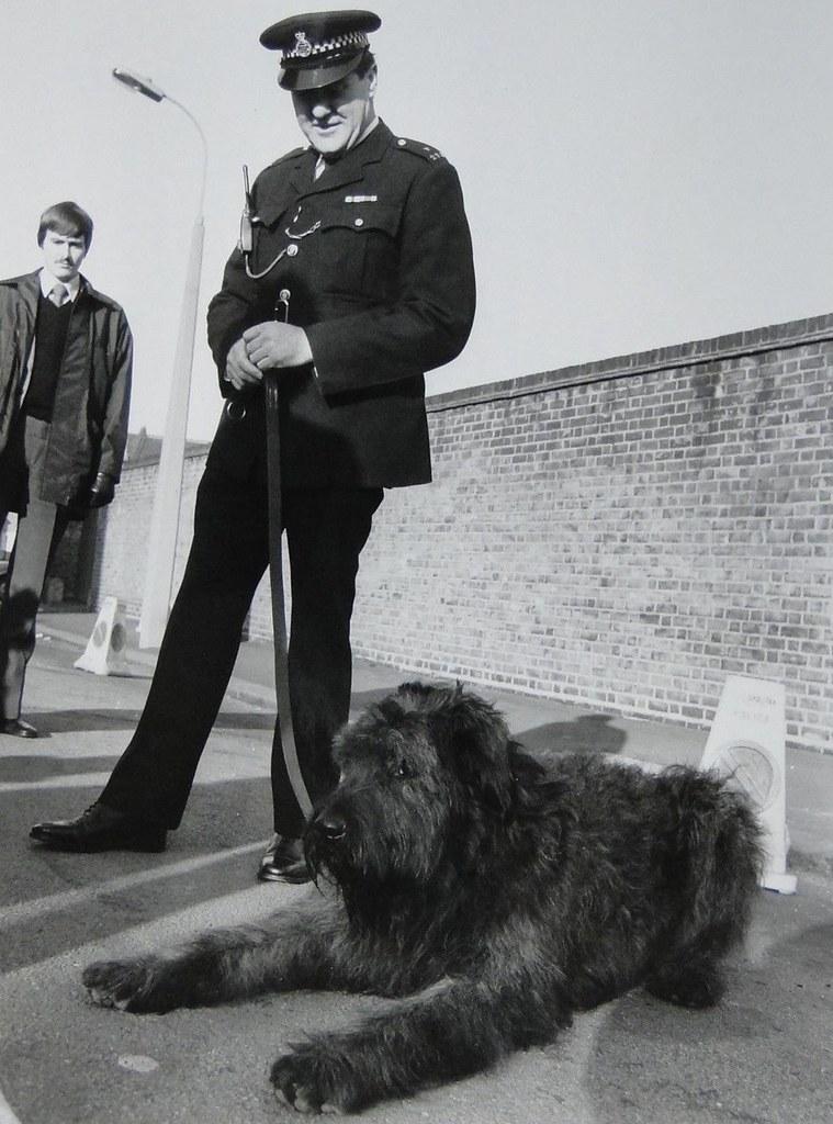 Самые популярные полицейские породы собак