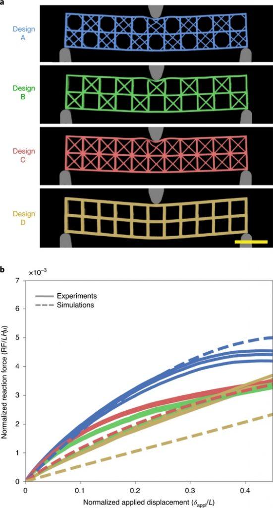 Как морская губка Euplectella aspergillum поможет усовершенствовать небоскрёбы и мосты?