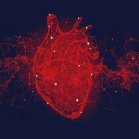 Учёные создали детальную клеточную карту сердца