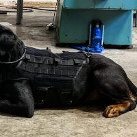 Армия США тестирует AR-очки для собак