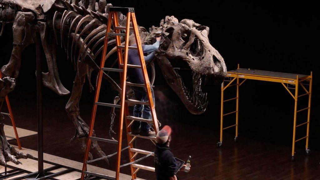 Тираннозавр Стэн стал самой дорогой окаменелостью в мире