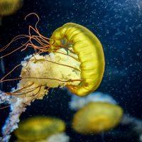 3 ноября: Всемирный день медуз