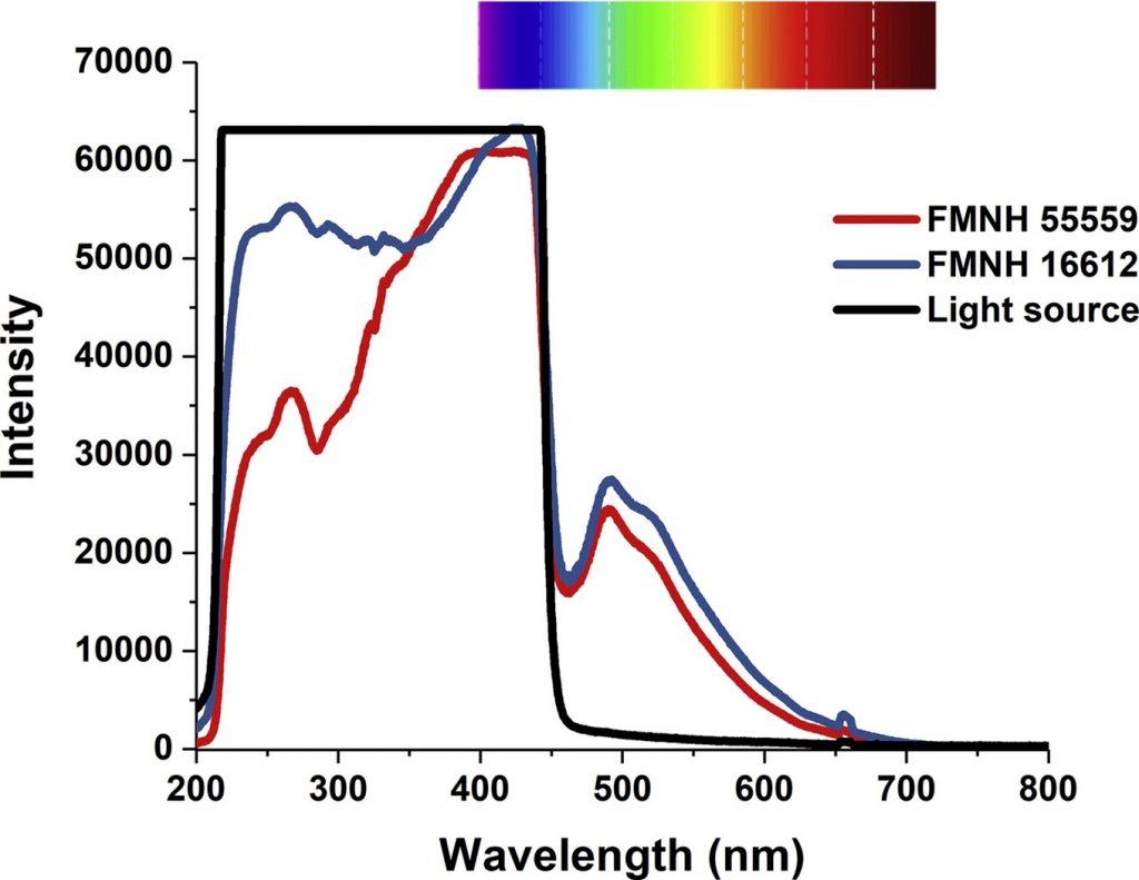 Утконосы могут светиться под действием ультрафиолетовых лучей