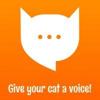 MeowTalk: приложение для перевода кошачьего языка