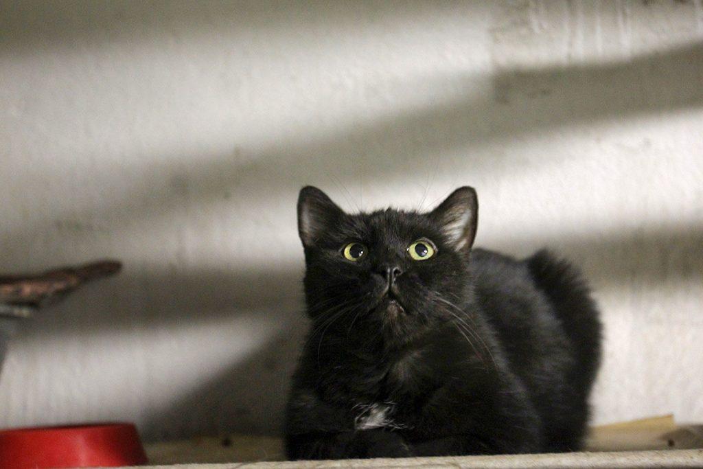 Французский меценат оставил наследство эрмитажным котам