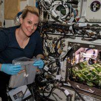 На борту МКС собрали первый урожай редиса