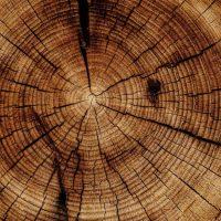 Учёные научились генерировать электричество из древесины