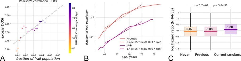 Учёные рассчитали максимальную продолжительность жизни человека