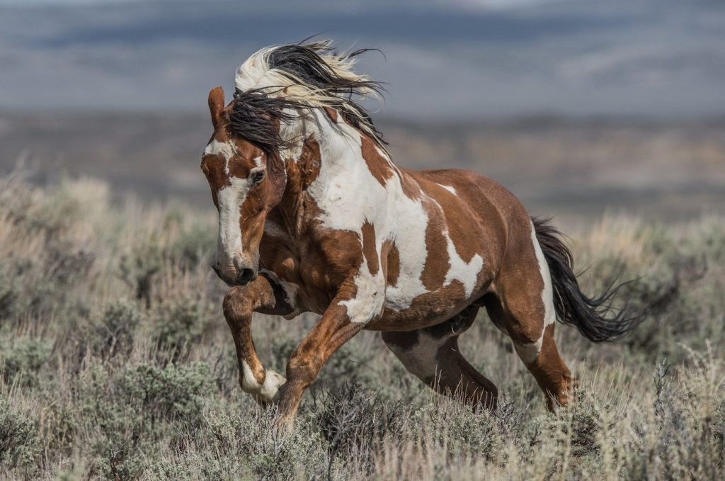Мустанги: интересные факты об одичавших лошадях Америки