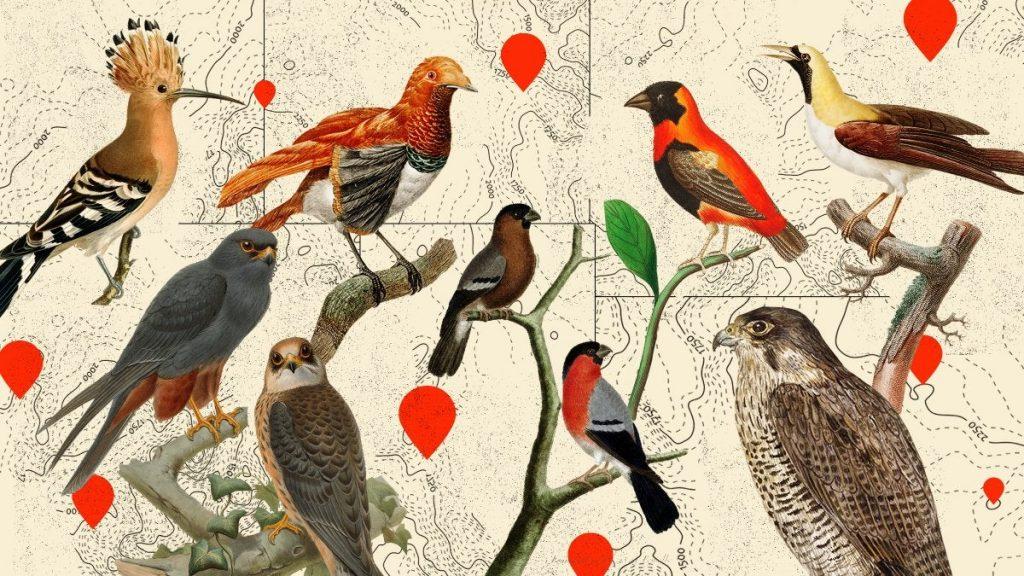 Учёные подсчитали, сколько диких птиц живёт на Земле