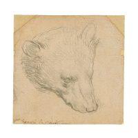 Рисунок да Винчи «Голова медведя» продадут на аукционе Christie's