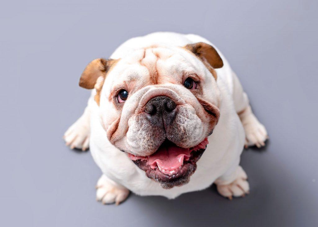 Какие собаки лучше устанавливают зрительный контакт с человеком?