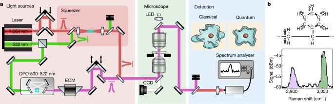 Новый квантовый микроскоп поможет увидеть «невозможное»