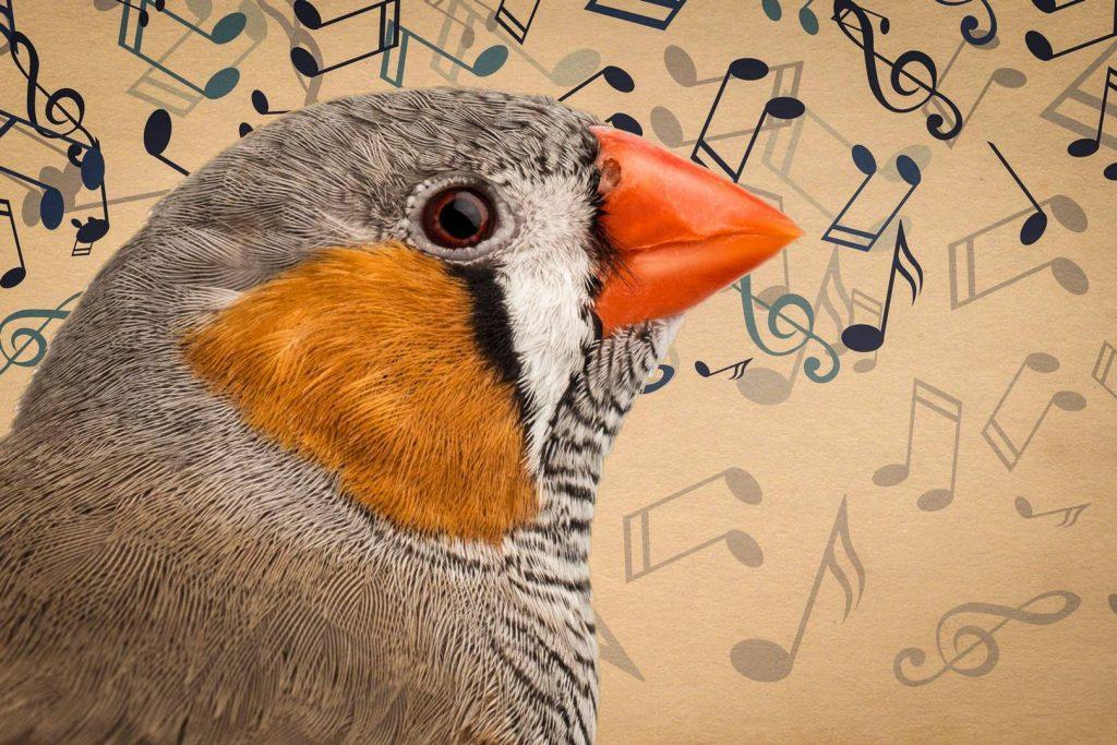 Учёные воспроизвели пение птиц по их мозговой активности