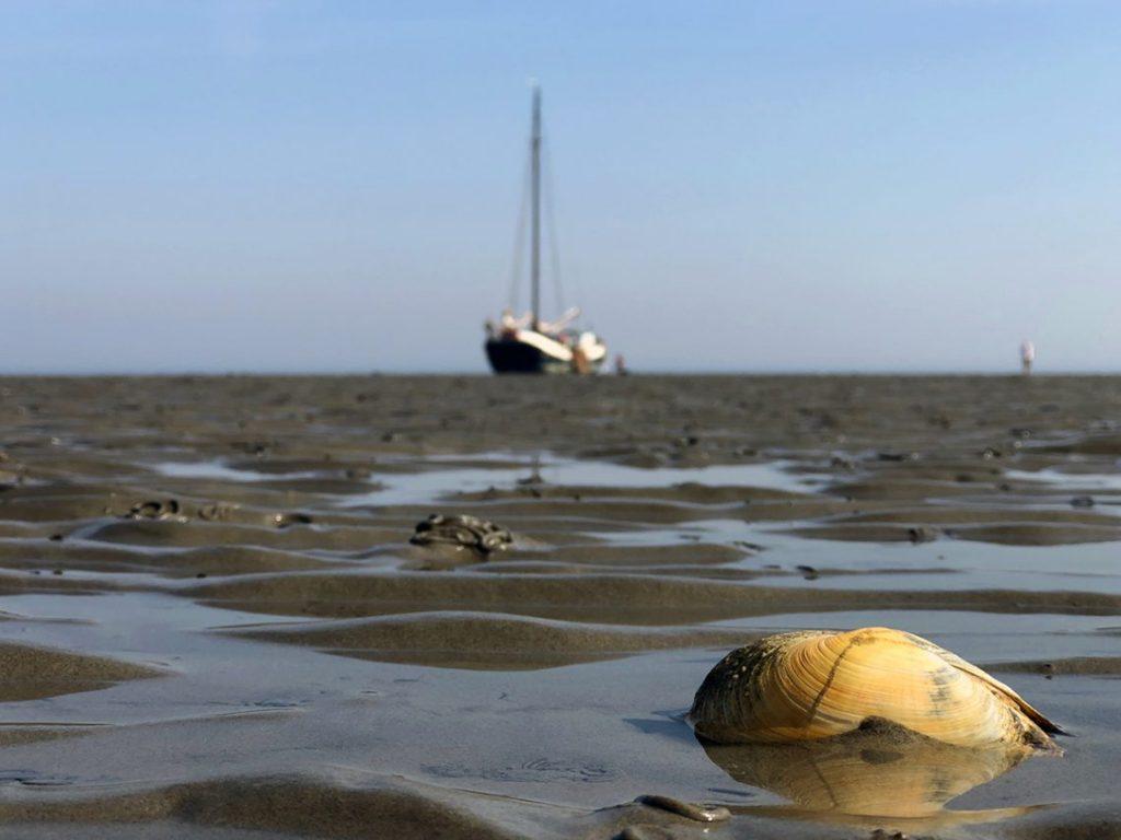 Ваттовое море: неповторимое чудо природы