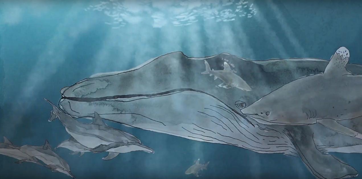 23 июля: Всемирный день китов и дельфинов