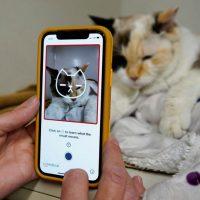 Tably: искусственный интеллект оценивает самочувствие кошек