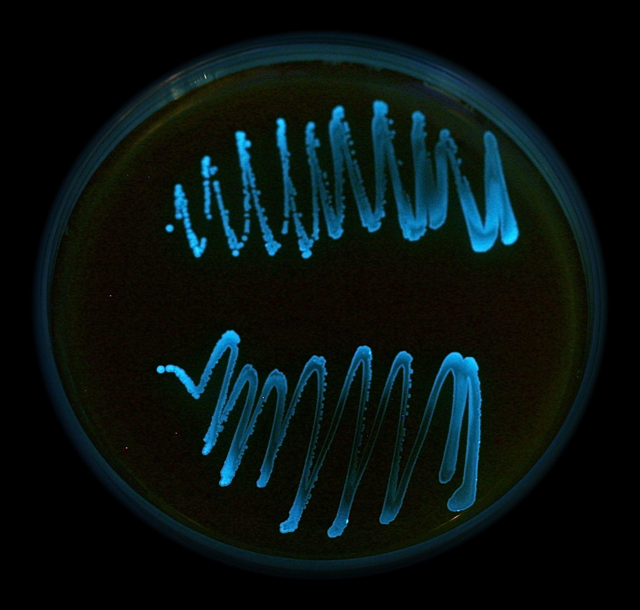 Молочные моря: учёные приблизились к разгадке феномена