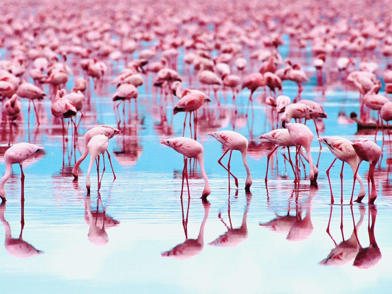 Интересные факты о прекрасных фламинго