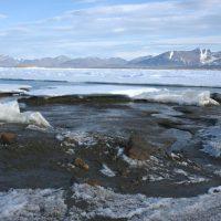 Qeqertaq Avannarleq: новый самый северный остров